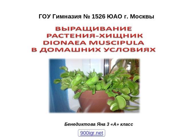 ГОУ Гимназия № 1526 ЮАО г. Москвы Бенедиктова Яна 3 «А» класс 900igr.net