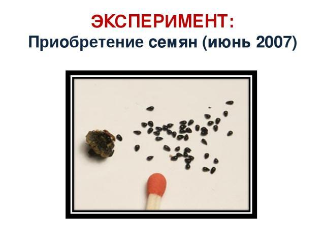 ЭКСПЕРИМЕНТ: Приобретение семян (июнь 2007)