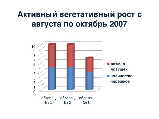 Активный вегетативный рост с августа по октябрь 2007