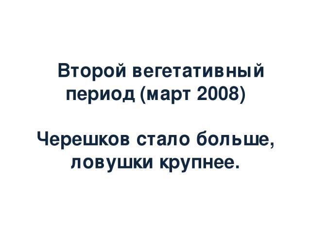 Второй вегетативный период (март 2008) Черешков стало больше, ловушки крупнее.