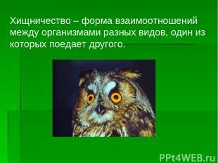 Хищничество – форма взаимоотношений между организмами разных видов, один из кото