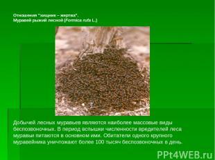 """Отношения """"хищник– жертва"""". Муравей рыжий лесной (Formica rufa L.)"""