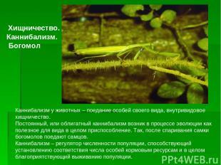 Каннибализм у животных– поедание особей своего вида, внутривидовое хищничество.