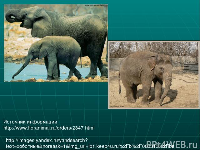 Источник информации http://www.floranimal.ru/orders/2347.html http://images.yandex.ru/yandsearch?text=хоботные&noreask=1&img_url=ib1.keep4u.ru%2Fb%2F080313%2Fbe%2Fbeee4ccc7a842519