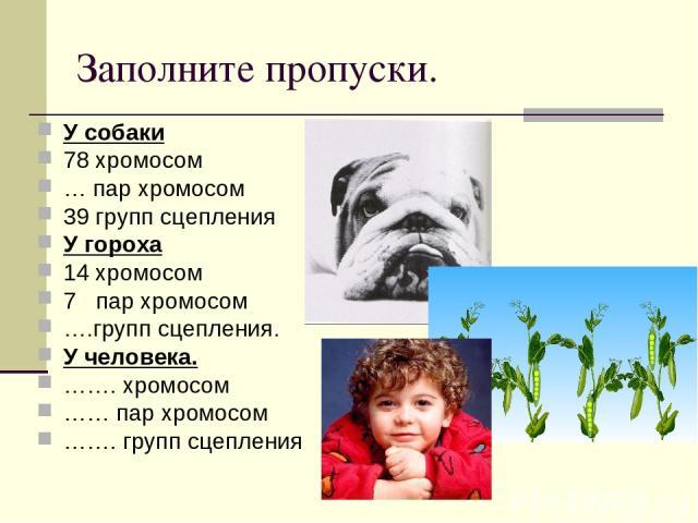 Заполните пропуски. У собаки 78 хромосом … пар хромосом 39 групп сцепления У гороха 14 хромосом 7 пар хромосом ….групп сцепления. У человека. ……. хромосом …… пар хромосом ……. групп сцепления
