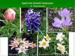 Царства живой природы: 4. Растения