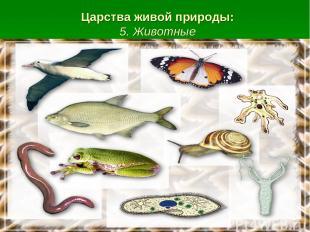 Царства живой природы: 5. Животные
