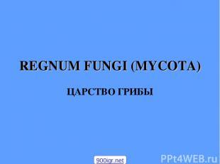 REGNUM FUNGI (MYCOTA) ЦАРСТВО ГРИБЫ 900igr.net