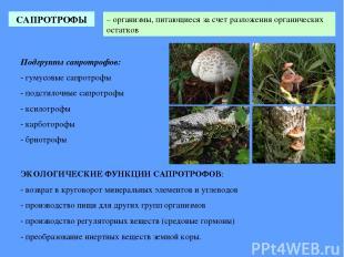САПРОТРОФЫ – организмы, питающиеся за счет разложения органических остатков ЭКОЛ