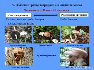 V. Значение грибов в природе и в жизни человека Численность - 100 тыс - 1,5 млн.