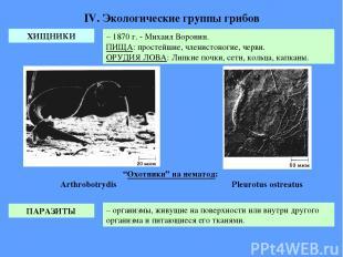 IV. Экологические группы грибов