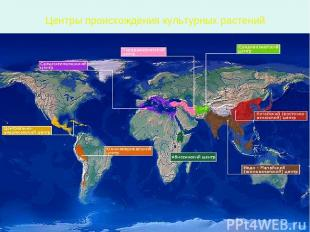 Центры происхождения культурных растений