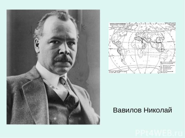 Вавилов Николай
