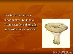Вся берёзовая Русь в радостном волненье: Появился белый груздь – царский гриб в