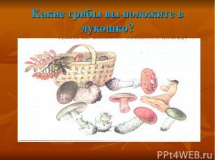 Какие грибы вы положите в лукошко?