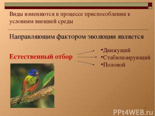 * Виды изменяются в процессе приспособления к условиям внешней среды Направляющи