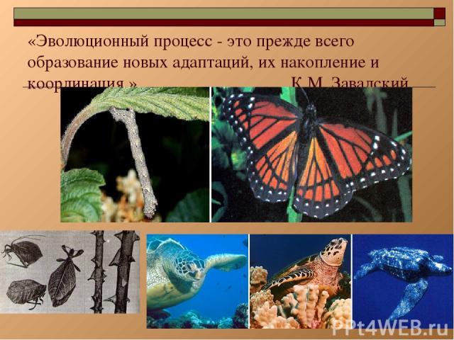 * «Эволюционный процесс - это прежде всего образование новых адаптаций, их накопление и координация.» К.М. Завадский