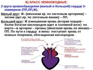 В) КЛАСС ЗЕМНОВОДНЫЕ: 2 круга кровообращения (малый и большой) сердце 3-хкамерно