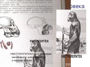 Предшественники человека АВСТРАЛОПИТЕКИ были связующим звеном между животным мир