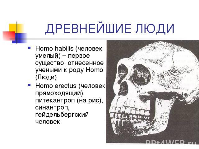 ДРЕВНЕЙШИЕ ЛЮДИ Homo habilis (человек умелый) – первое существо, отнесенное учеными к роду Homo (Люди) Homo erectus (человек прямоходящий) питекантроп (на рис), синантроп, гейдельбергский человек
