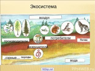 воздух производители потребители разрушители вода горные Экосистема 900igr.net