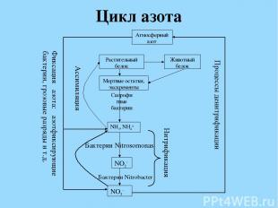 Цикл азота