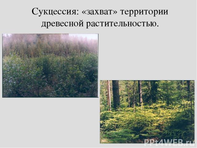 Сукцессия: «захват» территории древесной растительностью.
