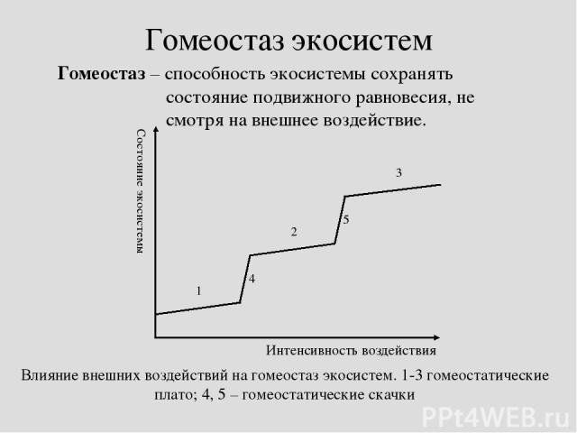 Гомеостаз экосистем Гомеостаз – способность экосистемы сохранять состояние подвижного равновесия, не смотря на внешнее воздействие.