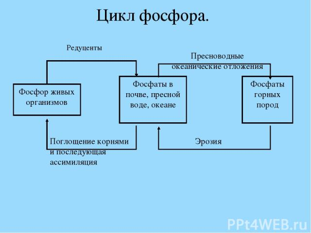 Цикл фосфора.