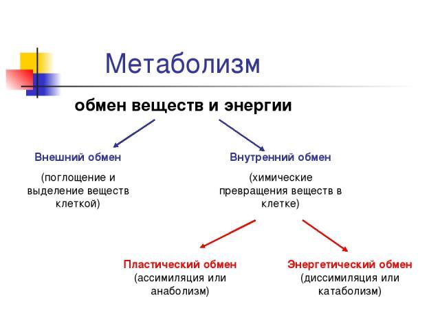 Метаболизм обмен веществ и энергии Внешний обмен (поглощение и выделение веществ клеткой) Внутренний обмен (химические превращения веществ в клетке) Пластический обмен (ассимиляция или анаболизм) Энергетический обмен (диссимиляция или катаболизм)