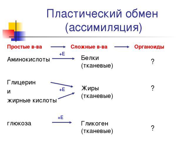 Пластический обмен (ассимиляция) Простые в-ва Сложные в-ва Органоиды