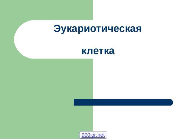 Эукариотическая клетка 900igr.net