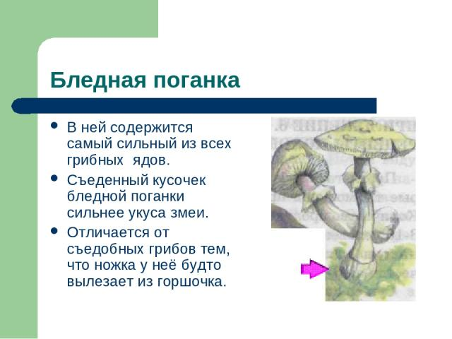 Бледная поганка В ней содержится самый сильный из всех грибных ядов. Съеденный кусочек бледной поганки сильнее укуса змеи. Отличается от съедобных грибов тем, что ножка у неё будто вылезает из горшочка.