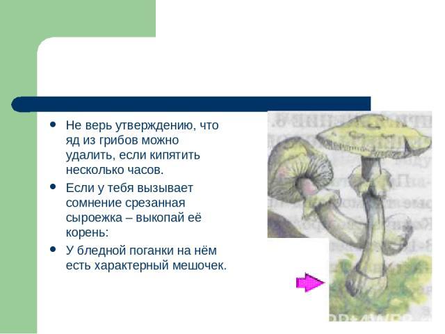 Не верь утверждению, что яд из грибов можно удалить, если кипятить несколько часов. Если у тебя вызывает сомнение срезанная сыроежка – выкопай её корень: У бледной поганки на нём есть характерный мешочек.
