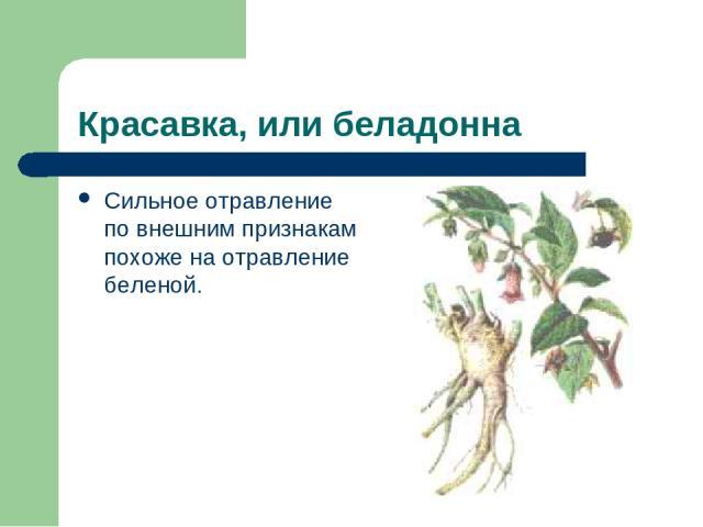 Красавка, или беладонна Сильное отравление по внешним признакам похоже на отравление беленой.