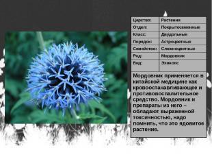 Царство: Растения Отдел: Покрытосеменные Класс: Двудольные Порядок: Астроцветные