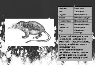 Царство: Животные Тип: Хордовые Подтип: Позвоночные Класс: Млекопитающие Инфракл