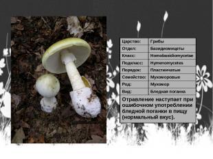 Царство: Грибы Отдел: Базидиомицеты Класс: Homobasidiomycetae Подкласс: Hymenomy