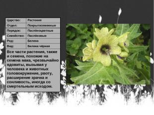 Царство: Растения Отдел: Покрытосеменные Порядок: Паслёноцветные Семейство: Пасл