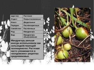 Царство: Растения Отдел: Покрытосеменные Класс: Двудольные Порядок: Паслёноцветн