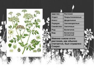 Царство: Растения Отдел: Покрытосеменные Класс: Двудольные Порядок: Зонтикоцветн