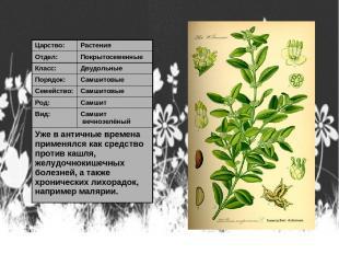 Царство: Растения Отдел: Покрытосеменные Класс: Двудольные Порядок: Самшитовые С