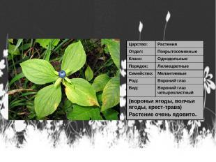 Царство: Растения Отдел: Покрытосеменные Класс: Однодольные Порядок: Лилиецветны
