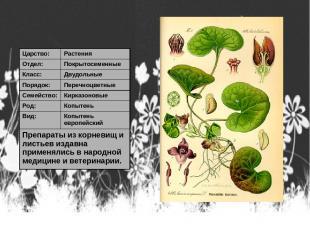Царство: Растения Отдел: Покрытосеменные Класс: Двудольные Порядок: Перечноцветн