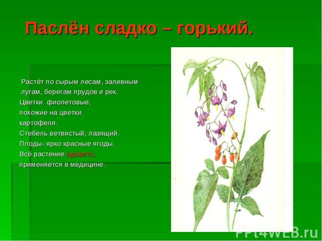 Паслён сладко – горький. Растёт по сырым лесам, заливным лугам, берегам прудов и рек. Цветки фиолетовые, похожие на цветки картофеля. Стебель ветвистый, лазящий. Плоды- ярко красные ягоды. Всё растение ядовито, применяется в медицине.