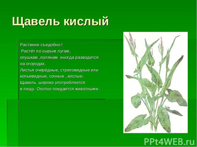 Щавель кислый Растение съедобно ! Растёт по сырым лугам, опушкам ,полянам иногда разводится на огородах. Листья очерёдные, стреловидные или копьевидные, сочные , кислые. Щавель широко употребляется в пищу. Охотно поедается животными.