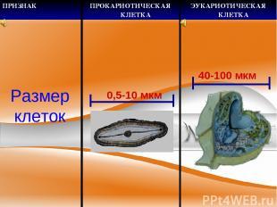 Размер клеток 0,5-10 мкм 40-100 мкм ПРИЗНАК ПРОКАРИОТИЧЕСКАЯ КЛЕТКА ЭУКАРИОТИЧЕС
