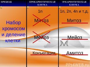 Набор хромосом и деление клетки 1n Митоз Мейоз Конъюгация 1n, 2n, 4n и т.д. Мито