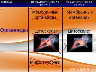 Органоиды Цитоскелет Микротрубочки Мембранные органоиды Цитоскелет Мембранные ор