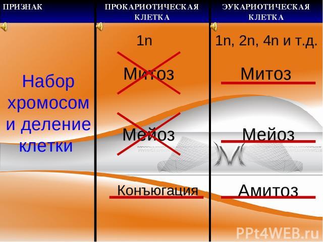 Набор хромосом и деление клетки 1n Митоз Мейоз Конъюгация 1n, 2n, 4n и т.д. Митоз Мейоз Амитоз ПРИЗНАК ПРОКАРИОТИЧЕСКАЯ КЛЕТКА ЭУКАРИОТИЧЕСКАЯ КЛЕТКА